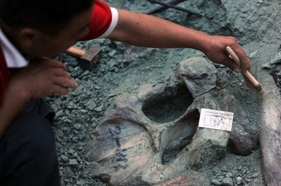 Figure 8 - Dinosaur excavations